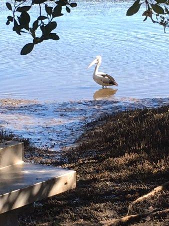 Iluka, Australia: photo1.jpg