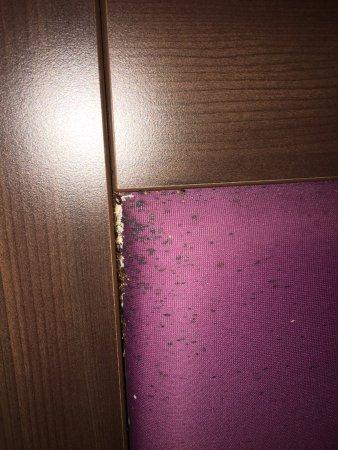 Leonardo Hotel Antwerpen: wandluizen in het bed