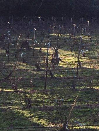 Lark Hill Winery Restaurant: photo0.jpg