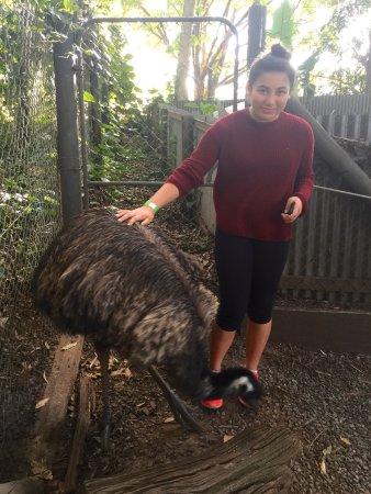 Woombye, أستراليا: photo2.jpg