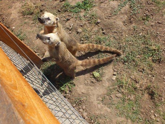 хищное животное, с рук не кормить и не гладить!!!!!