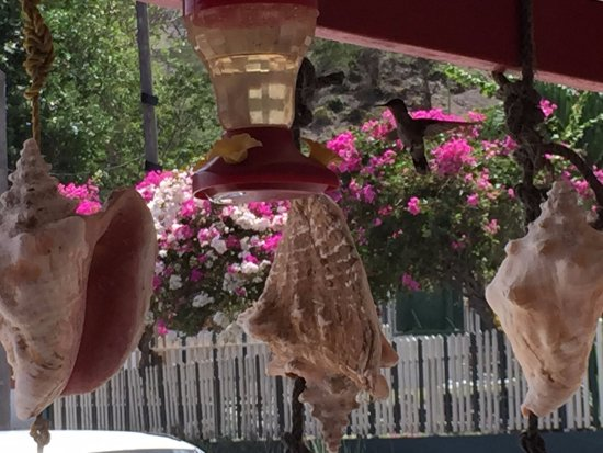 San Eustaquio: Watching the hummingbirds feed during surface intervals was fascinating.