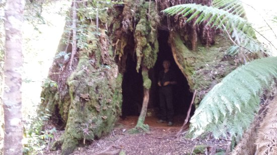 Maydena, Αυστραλία: The Chapel tree is the largest tree I've seen in the whole of Tasmania. 8-10M wide at the base.
