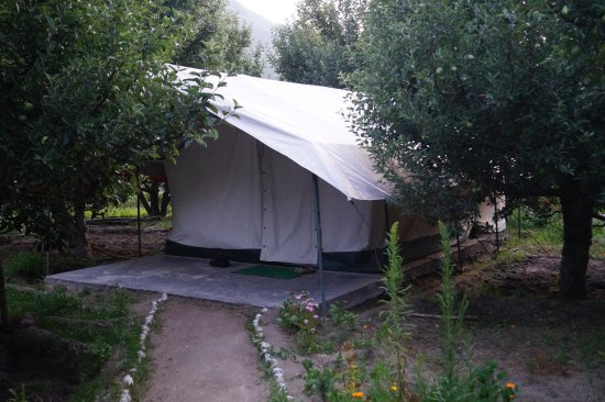 Apple Orchard Farm and Camping: The tents on the property