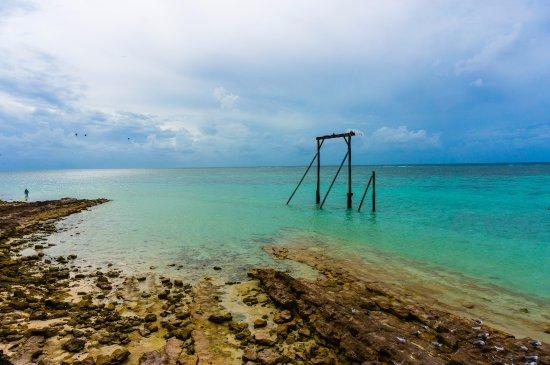 Heron Island-bild