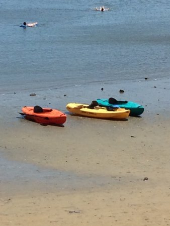 West Bath, ME : Eagles nest with mamma and 2 eaglets. Our kayaks on the shore of Thomas point state park beach