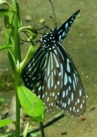 Karimannoor, India: 20160630_140728_large.jpg
