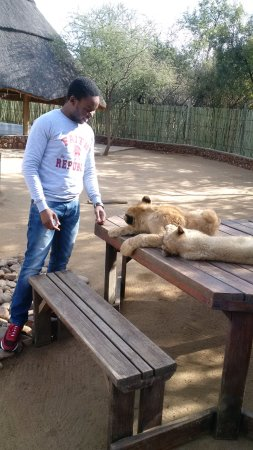 Ukutula Lion Park: Lions can sleep for up to 20 hours a day