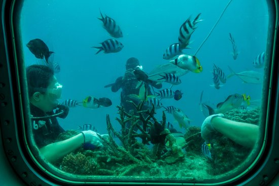 """Piti, Mariana Islands: Untrained """"Divers"""" Hanging onto the Coral"""