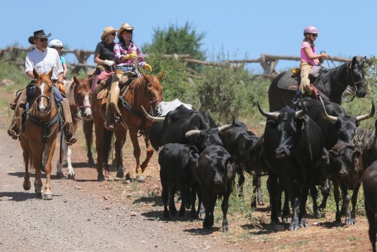 Mc Coy, Κολοράντο: You participate in an ACTUAL Cattle Drive! Go out & find cattle them drive back to ranch!