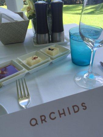 Orchids: photo0.jpg