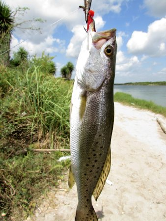 Rio Hondo, TX: I love her ,but I love to fish