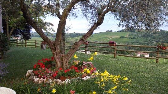 Dolegna del Collio, Italia: giardino