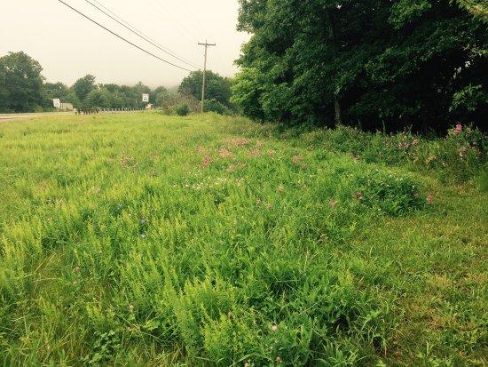 Battle of Cloyd's Mountain - Virginia Historical Marker