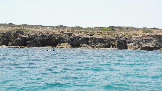 Neas Diving