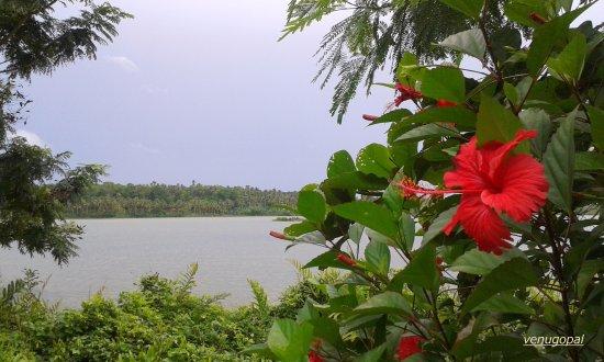 Fragrant Nature Backwater Resort & Ayurveda Spa: Paravur Mala Kayal