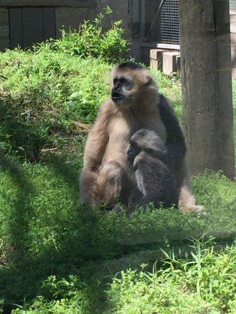 Stoneham, MA: Cute variety of animals