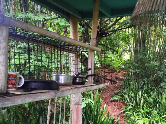 Tropical Treehouse: View from kitchen