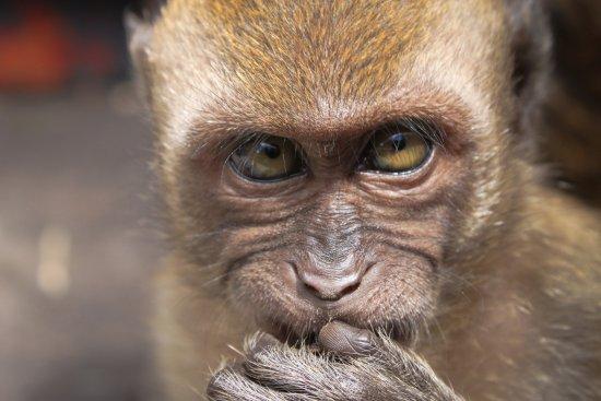 สลังงอร์, มาเลเซีย: Обезьянки по пути в пещеру