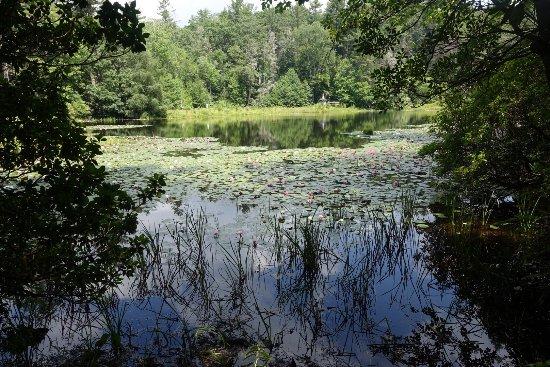 Highlands Biological Station, Nature Center and Botanical Gardens: photo1.jpg