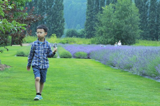 Redmond, Waszyngton: My son really liked lavender ice cream
