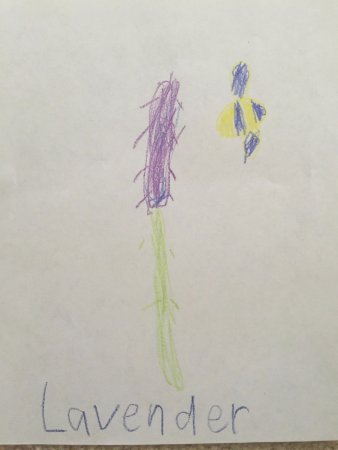 Redmond, Waszyngton: The drawing by my son, lavender and a bee, if you can't see them :D
