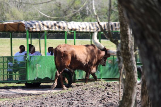 Alvin, TX: Animals seen in the tour