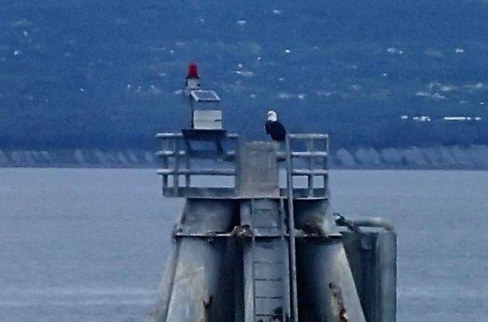 Land's End Resort: Eagle hanging out