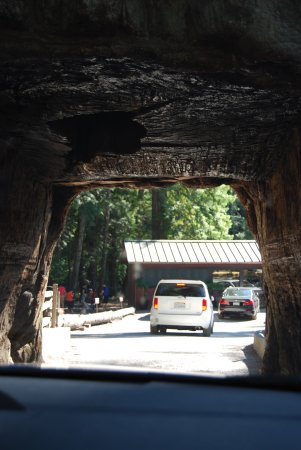View from inside chandelier tree picture of chandelier drive chandelier drive through tree view from inside chandelier tree mozeypictures Image collections