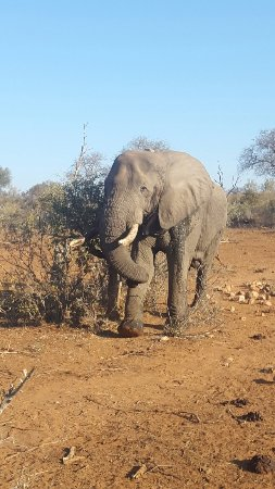 Balule Private Game Reserve, Sudáfrica: 20160701_153630_large.jpg