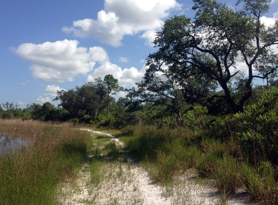 Allen David Broussard Catfish Creek Preserve State Park: One of the hiking trails along some lakes