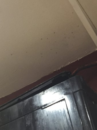 Caledonian Hotel: Mouldy roof in Bar toilet