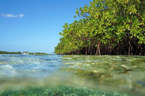 Cool Caraibes: mangrove ilet Caret