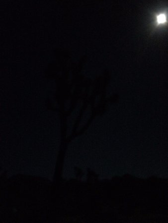 Twentynine Palms, CA: It's hard to see, but you can make out the outline of the joshua tree under the moonlight.