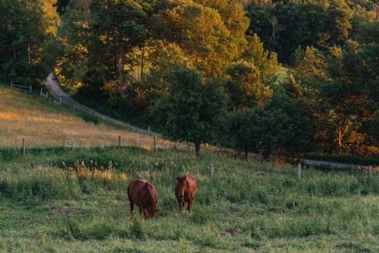 Rupert, VT: Horses along old town road.