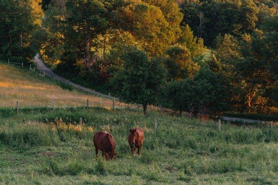 Rupert, Вермонт: Horses along old town road.