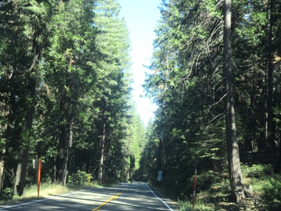 sierra national forest california