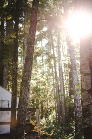 Sechelt, Καναδάς: 8 Acres of rain forest and shaded mossy trails