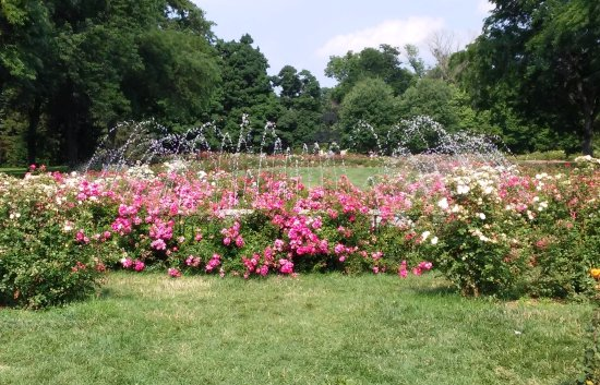 Whetstone Park Of Roses