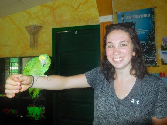 Hostel Villa Mary: The hostel parrot!