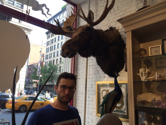 """The Evolution Store: """"Moose and Man"""""""