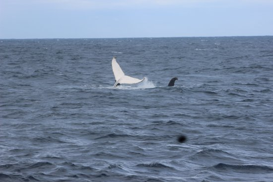 Cowes, Australien: First whale sighting