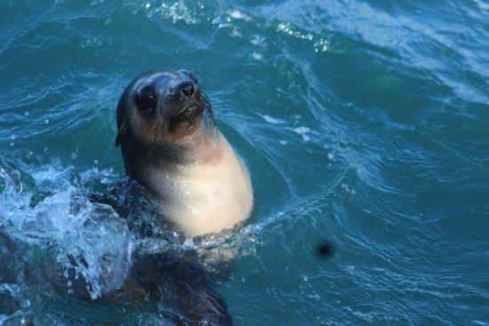 Cowes, Australien: Smelly but cute Seals were great fun to watch