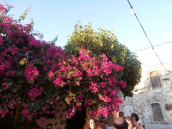 Maza, Grèce : Draped with flowers.