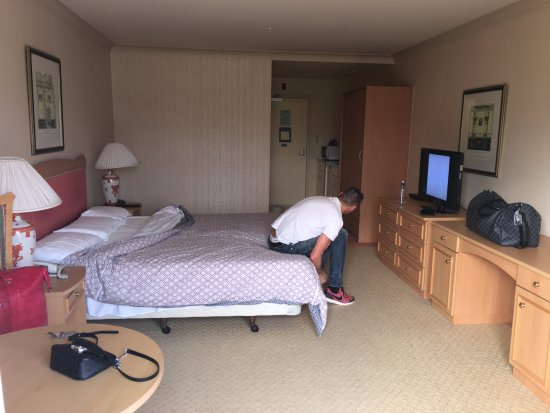 Gulf Harbour Lodge: The room is large and just needs a wee bit of a refresh