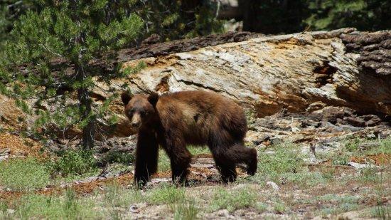 ฟิชแคมป์, แคลิฟอร์เนีย: Rencontre dans le parc de Yosemite, à 5 minutes de Tin Lizzie Inn