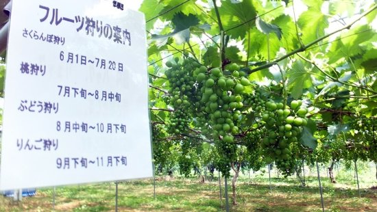 Hanagasa Kanko Fruit Farm