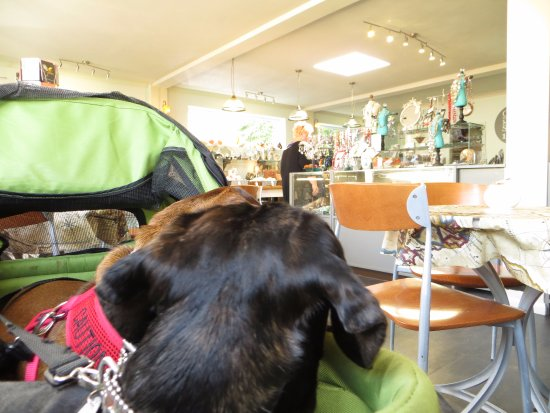 e98ebdaedbf0 Alfie and Jimi inside the Grotto cafe and shop - Picture of The ...