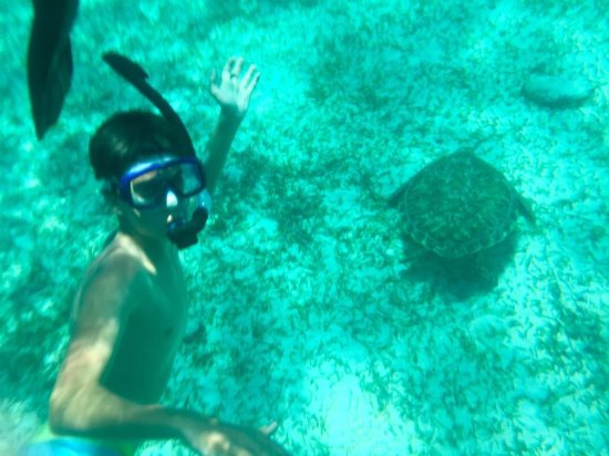 Caye Caulker, เบลีซ: Our 14-year-old Isaac on his first snorkel adventure and thrilled to be swimming with sea turles