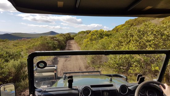 Grootbos Private Nature Reserve: View from the Land Rover during our fynbos drive.